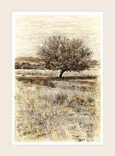 Thorn Tree - Marlene Neumann Fine Art Photography www. Fine Art Photography, Landscape Photography, Neumann, One Tree, African, Black And White, Artwork, Trees, Inspiration