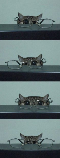 cat with glasses//