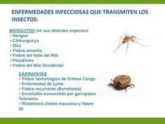 Repelente de insectos | +Felicidad +Bienestar