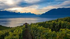 The first motivation to visit is the region's light, crisp, mineral-forward Chasselas wines. The second is the stunning beauty of the terraced landscape raising up from Lake Geneva. Lake Geneva Switzerland, Switzerland Tourism, Vevey, Lausanne, Wallis, Places To Travel, Places To See, Travel Stuff, Annecy France