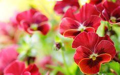 flower free 2880x1800