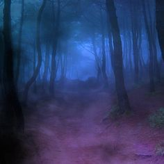 Forest_fog3 ❤ liked on Polyvore featuring backgrounds, pictures, blue, photos, forest, fillers, wallpaper, scenery, effects and texture