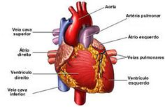 The leading cause of death in the US according to the Center for Disease Control (CDC.gov) is Cardiovascular disease. What Is Heart Attack, Causes Of Heart Attack, Healthy Diet Tips, Healthy Weight Loss, Healthy Recipes, Arte Com Grey's Anatomy, Heart Muscle, Heart Conditions, Nursing