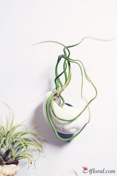 DIY Air Plant Magnet