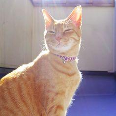 . #ミラーレス一眼#pentax#pentaxqs1#写真#写真好きな人と繋がりたい#ファインダー越しの私の世界#カメラ女子#猫#愛猫#camera#photo#photography#instagood#instalike#instapic#instaphoto#cat#love