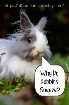 Why do Rabbits Sneeze - Three main reasons why they do so. How to you manage it? Rabbit Cages, House Rabbit, Dutch Rabbit, Watery Eyes, Seasonal Allergies, Water Me, Animal House, Litter Box, Rabbits