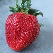 life as a strawberry Fruits Recipe Index