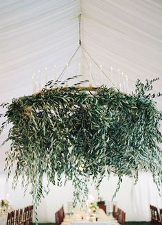 Living Chandeliers : Look up! Chandeliers draped in greenery add an element of surprise to your space.