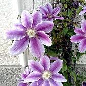 Kysnutý pudingový koláč (fotorecept) - recept   Varecha.sk Plants, Plant, Planets
