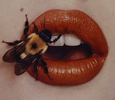 """Bee-stung lips by Irving Penn--can't put this in """"animals"""" or """"human beauty"""". Bee-stung lips by Irving Penn--can't put this in """"animals"""" or """"human beauty""""--it makes me want to scream a Hopeless Fountain Kingdom, Beyond Beauty, Orange Aesthetic, Aesthetic Art, Lip Art, Drawing Reference, Photo Reference, Fine Art Photography, Photography Aesthetic"""