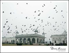 Red Fort, Delhi, India by Dori Moreno People Leave, Delhi India, Incredible India, Life Photography, To Go, Louvre, The Incredibles, Country, Places