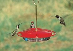 When customers have concerns about hard-to-clean nectar feeders, show them Aspects' HummZinger line. The bright red cover attracts hummers from a distance and removes easily so the bowl can be cleaned quickly and thoroughly. Homemade Hummingbird Nectar, Make Hummingbird Food, Hummingbird Plants, Sugar Water For Hummingbirds, How To Attract Hummingbirds, Wild Bird Feeders, Humming Bird Feeders, Humming Birds, Hummingbird Feeder Parts