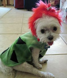 cave girl halloween costumes for dogs
