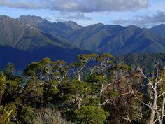 Kahurangi National Park, northwest corner of South Island, NZ // photo by miles carter