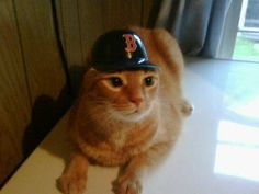 Newest member of the Boston Red Sox.