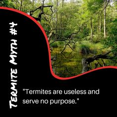 Check out our Termite Myths blog to learn the truth to this myth: www.goterminator.com/blog/debunking-termite-myths #TerminatorTPC #TermiteMyths #TermiteInfo Diy Termite Treatment, Termite Pest Control, Termite Inspection, Concrete Pad, The Incredibles, Blog, Check, Blogging