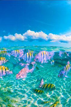 Go snorkeling 🐠🐠🐠🌊 uploaded by Rebecca Orr on We Heart It