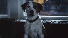 Downward Dog Series Trailer #DownwardDog