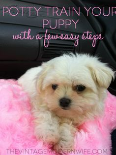 Potty Training Your Puppy in a few easy steps
