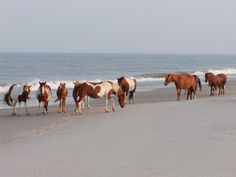 assateague state park | Assateague State Park, a Maryland State Park located nearby Berlin ...