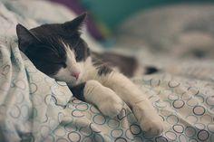 sleeping kitty... adorable !