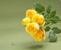 Baby Rio® SUN CITY Spray Rose