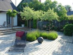Weeping silver pears under planted with lavender Modern Landscaping, Garden Landscaping, Small Gardens, Outdoor Gardens, Landscape Architecture, Landscape Design, Townhouse Garden, Pyrus, Contemporary Garden