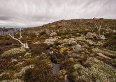 The fragile and unique Tasmanian Alpine environment is stunning. Amazingly this spot is just a 20 min drive from Hobart, Tasmania on top of kunanyi / Mt Wellington. Alpine Loop, Ice Houses, Hiking Tours, Tasmania, Walking Tour, Bird Watching, Bouldering, Outdoor Activities, Landscape Photography