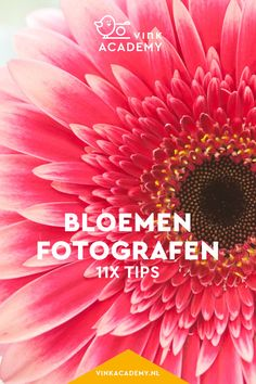 Bloemen fotograferen: 11 tips • Vink Academy Digital Art Tutorial, Studio Setup, Art Tutorials, Black And White, Pictures, Photos, Creative, Tips, Flowers