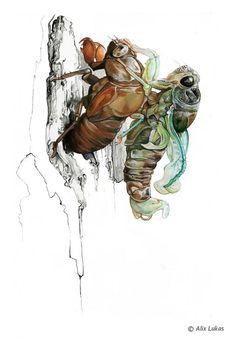 Alix Lukas Guild of Natural Science Illustrators