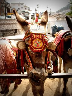 burro taxi: Mijas, Spain - we might just have to take one of these...
