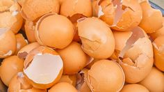 You Will Never Throw Away Eggshells After Watching This
