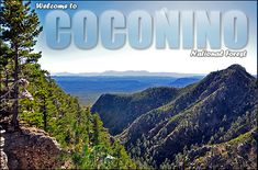 The Coconino National Forest is one of the most diverse National Forests in the country with landscapes ranging from the famous Red Rocks of Sedona to Ponderosa Pine Forests, to alpine tundra. Explore mountains and canyons, fish in forest lakes and wade in lazy creeks and streams. Image of Mogollon Rim