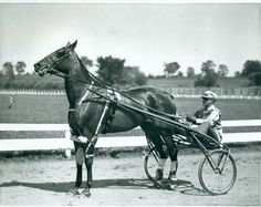 Hanover Maid with driver Harry Pownell - 1930s.  This is how they rigged trotters in the Depression: heel boots, knee boots, elbow boots.  She later had a champion colt in Hardy Hanover and her daughter Mimi Hanover (Dean Hanover) is the dam of both Speedster and Speedy Rodney.