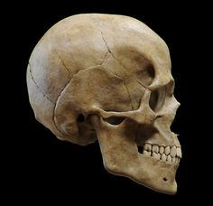 Skull by Guzz Soares | Medical Visualization | 3D | CGSociety