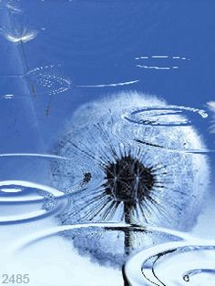 Moving Pictures, Animated Gif, Animation, Dandelions, Flowers, Plants, Kids, Naturaleza, Colors