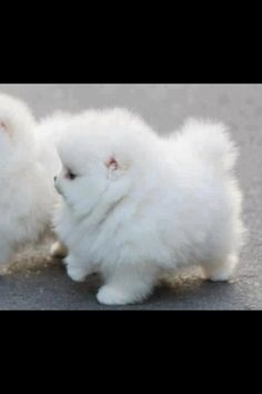 fat fluffy doggie puppy