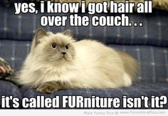 Yes, I know I got hair all over the couch... its called FURniture isn't it?