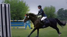 Horses Are Better Than People Horses Jumping Videos, Horse Videos, Show Horses, Cross Country Jumps, Show Jumping, Horse Pictures, Horse Love, Cute Funny Animals, Horse Riding