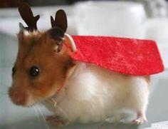 Dear hamster,.... lapinoen