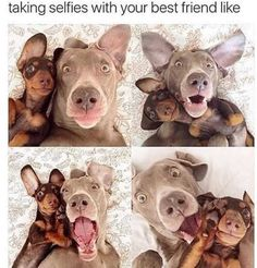 Funny Animal Pictures Of The Day 26 Pics - Funny Animal Quotes - - cool Funny Animal Pictures Of The Day 26 Pics by www.dezdemonhumor The post Funny Animal Pictures Of The Day 26 Pics appeared first on Gag Dad. Funny Animal Jokes, Funny Dog Memes, Cute Funny Animals, Funny Animal Pictures, Cute Baby Animals, Funny Cute, Funny Dogs, Funniest Memes, Hilarious