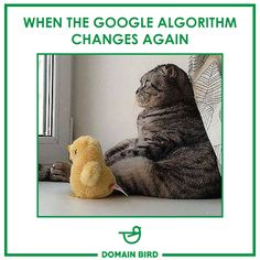 Google algorithm Happy Friday Online Campaign, Digital Marketing Services, Happy Friday, Google, Tips, Counseling