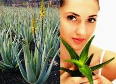 Small Business Ideas | List Of Small Business Ideas: How To Start Own Aloe Vera Farming Business