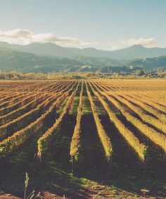 New Zealand might be known for Sauvignon Blanc (sometimes known as Savvy B), but there are a great suite of other wines coming out of the country.