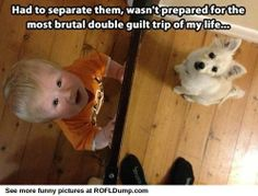 I want to play with hiiiim #baby #funny #meme #dog #lol