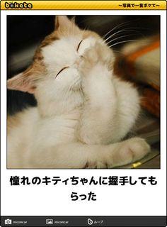 憧れのキティちゃんに握手してもらった Animals And Pets, Funny Animals, Cute Animals, Cute Cats, Funny Cats, Cat Expressions, Lots Of Cats, Animal 2, Cute Friends