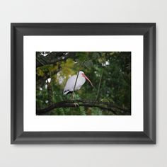 Bird in tree by Sarah Shanely Photography $31.00