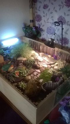 Here is one community members housing for Brandy, Coke, Stella and Tia! Post pictures of your horsefield tortoise and housing in the comments below! Horsefield Tortoise, Hermann Tortoise, Tortoise House, Tortoise Habitat, Turtle Habitat, Sulcata Tortoise, Turtle Enclosure, Reptile Enclosure, Tortoise Enclosure Indoor