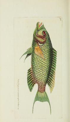 v.21 - miscelánea del naturalista, o figuras en color de algunos objetos naturales - Biodiversity Heritage Library
