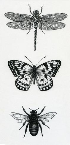Lisa Alderson - LA - Bugs